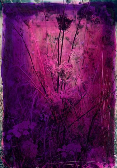 Veronica BaileyTwined Flowers, 2014© Veronica Bailey / Courtesy of Bernheimer Fine Art