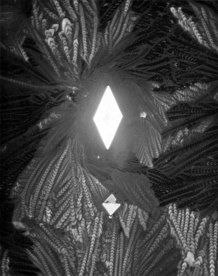 Carl Strüwe: Ein Kristall ist geboren (Asparaginsäure)