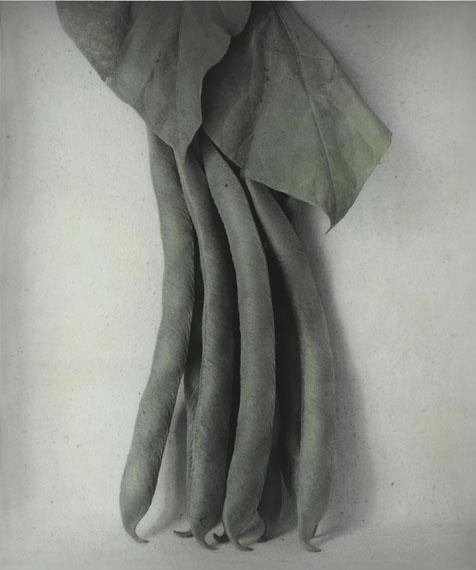 """Ingar Krauss: aus der Serie """"Von Pflanzen und Tieren"""" 2014, Fotografie auf Silbergelatinepapierhandkoloriert mit Ölfarben © Ingar Krauss"""