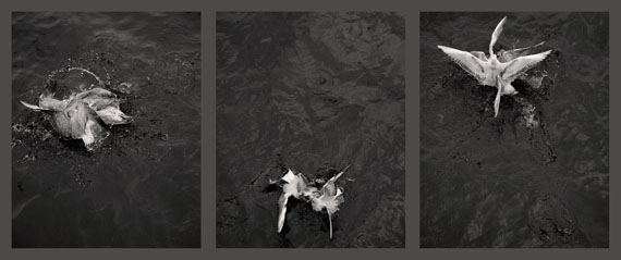 Loredana Nemes: Gier, 2014