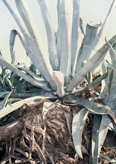"José Pedro Cortes: Untitled (Costa #9), from the series ""Costa"", 2013"