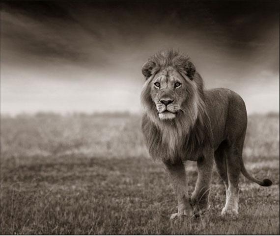 Anton Lyalin. Portrait of Africa # 9, 2009