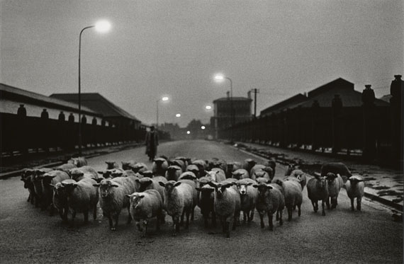Sheep going to the Slaughter, Early Morning, Near the Caledonian Road, London 1965 © Don McCullin