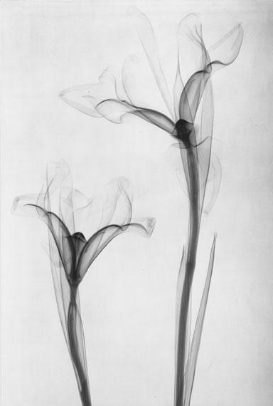 Simone Kappeler: Iris, 22.2.1997Courtesy Galerie Esther Woerdehoff