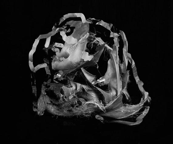 Palm© Nico Krijno/The Ravestijn Gallery
