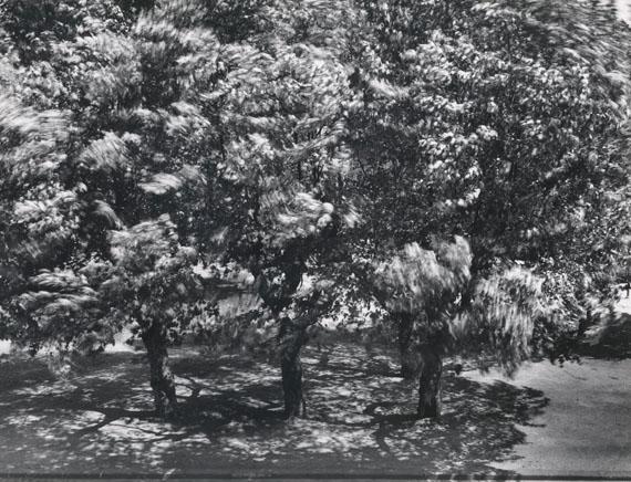 OTTO STEINERT: Bäume vor meinem Fenster II, 1956Vintage Silbergelatineabzug / Vintage silver print, 49,9 x 59,6 cm© Courtesy Galerie Johannes Faber