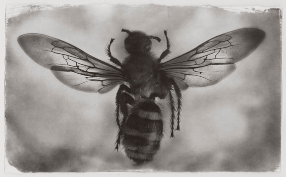 "Gregor Törzs: ""Bee"" © Courtesy of Bernheimer Fine Art Photography"