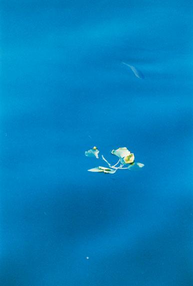 Frank Mädler: Fisch in Blau, 2016, analoger C-Print, 171,5 x 119 cm