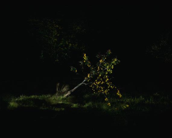 Mila Teshaieva: Bedrohtes Paradies, 105 x 84 cm, 2015