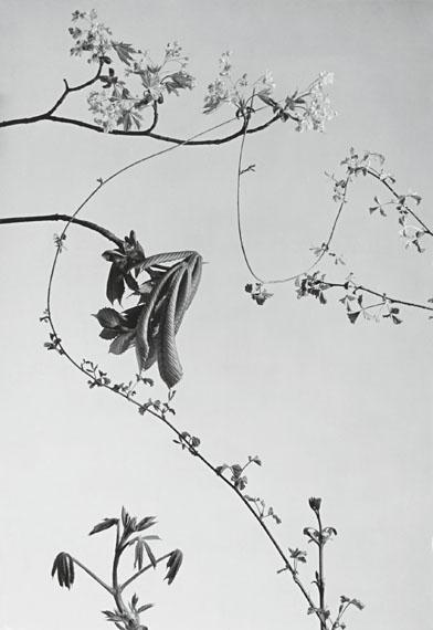Plants, ca. 1941, Platinum Palladium Print, Edition 5+2AP, 40x50cm © Werner Bischof/Magnum Photos