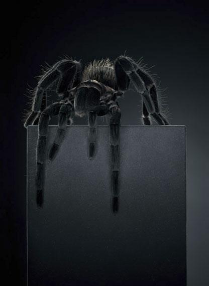Peter Hebeisen: Tarantula, 2012 Pigment print on Archival paper Ed. of 8145 x 112cm (Ed.5) and 218 x 160 cm (Ed.3)