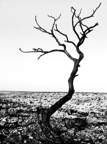 The (Im)Personal Landscape