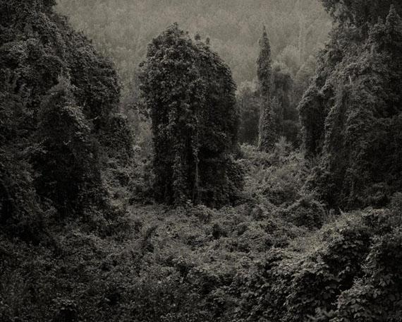© Helene Schmitz | Kudzu Project