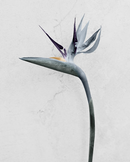 Vee Speers: Botanica, 2016© Vee Speers - courtesy Wild Project Gallery