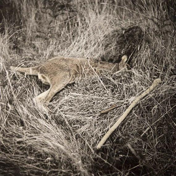 James Tylor: Hunting Kangaroo