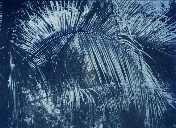 Douglas Mandry: 5 minutes to the sun, Kerriodoxa elegans, 2014   Archival Pigment Print   80 x 110 cm   Edition 3 & 2 AP