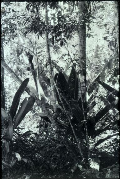 Luzia Simons (BRA)Landschaft Nr. 1Humboldt ist nie da gewesen, 2013A1A Piegmentdruck82 x 55 cm