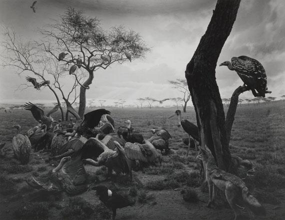 Hyena-Jackal-Vulture, 1976. Gelatin silver print © Hiroshi Sugimoto