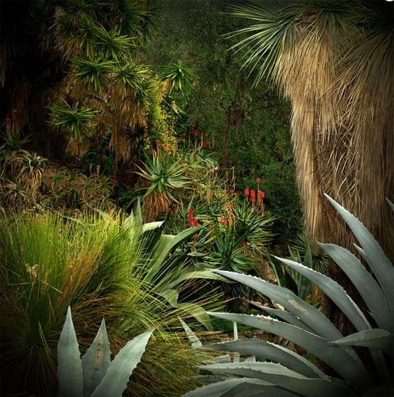 Olivia LAVERGNE, Jungles 3, Tirage Fine Art, 100 x 100 cm, Ed.5