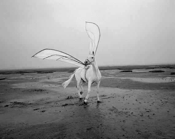 Jaschi Klein: Pegasus