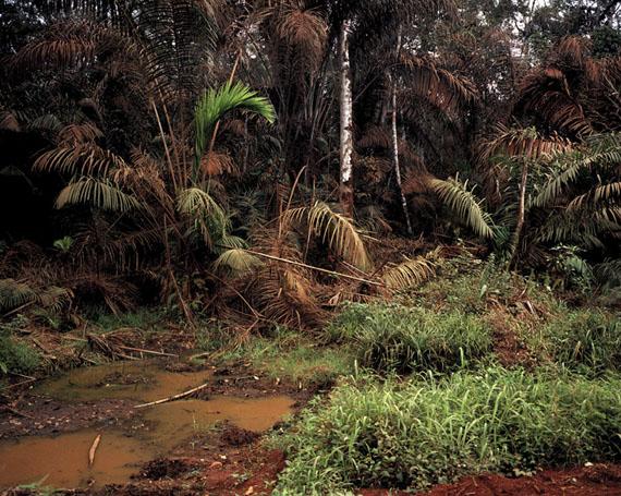 Andréas Lang: Sumpfwald, Cameroun 2016, Archival Pigment Print