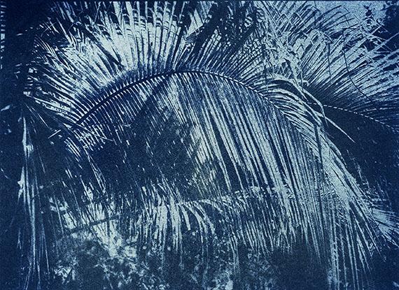 Five minutes to the sun, Kerriodoxa elegans, 2014, 80 x 110 cm, Edition of 3 & 2 AP, Archival Pigment Print© Douglas Mandry