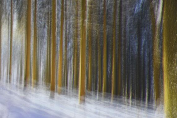 Glades No. 3, 2017, 100 x 150 cm, Edition 3 & 2 AP, Archival Pigment Print© Karina Wisniewska