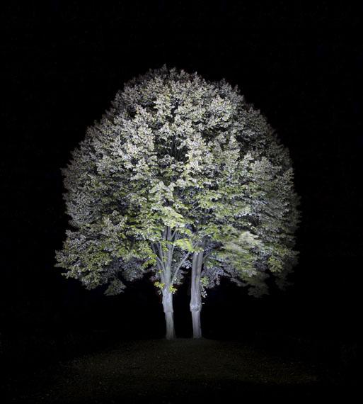 Ralf Peters: Baum 2, 2010, 200 x 184 cm, C-Print/Diasec
