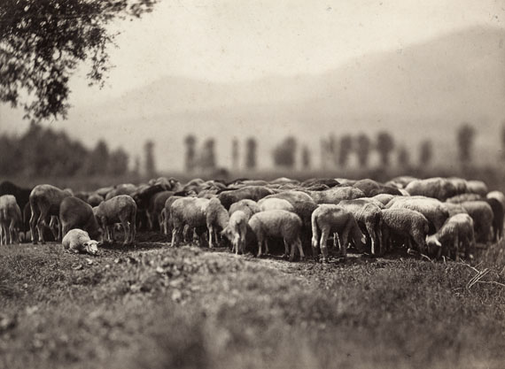 Adolphe Braun, Herd of sheep, 1860-1862, Albumen print © Münchner Stadtmuseum
