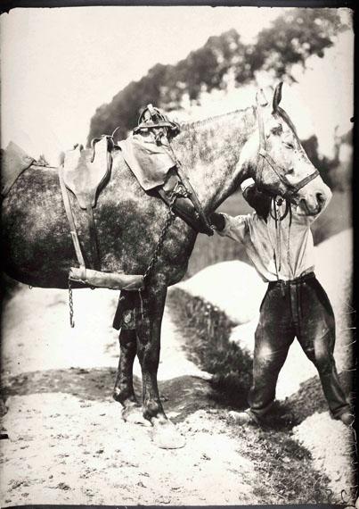 121.Eugène Atget (1857-1927)Horse study, c. 1898-1900.Profil horse and groom.Gelatin silver print