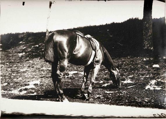 120.Eugène Atget (1857-1927)Horse study, c. 1898-1900.Profil horse and groom.Gelatin silver print