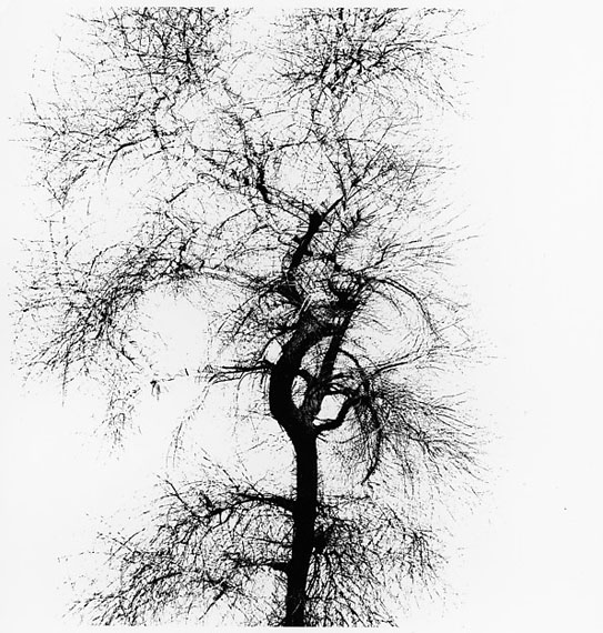Harry Callahan, Muliple Exposure Tree, 1956, Vintage gelatin silver print, 26 x 25 cm © Estate of Harry Callahan / SAGE Paris.