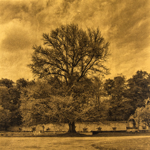 Gilles Lorin, THE TREE WITH A THOUSAND COINS Palladium Print & pure gold leaf. 2015.Printed in 2015. Signed and numbered in pencil. Limited edition. On handmade Japanese gampi.300 x 300 mm (450 x 450 mm)Courtesy Jörg Maaß Kunsthandel