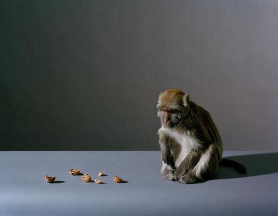 Olivier Richon: Portrait of a Monkey, 2008, C-type analogue, 93 cm x 70 cm, Edition 3/5