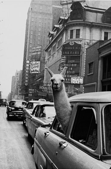 Inge Morath