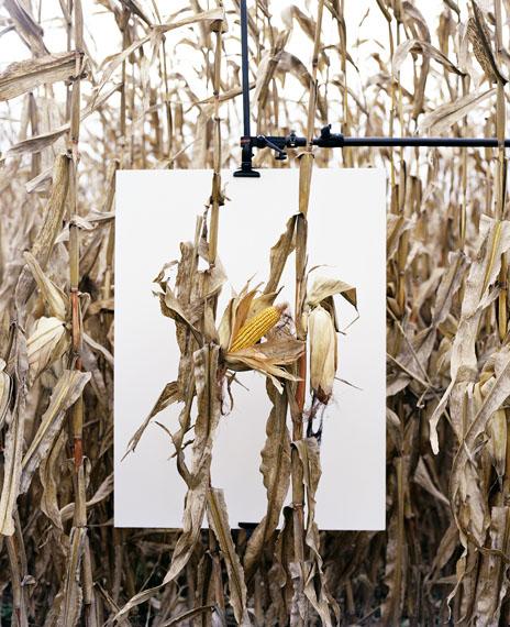 Mathieu Asselin: Van Buren, Indiana, 2013, aus dem Projekt Monsanto®: A Photographic Investigation © Mathieu Asselin