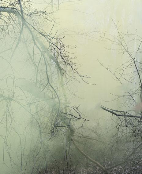 Sandra KantanenUntitled (Forest 3)2016, Pigmentprint© Sandra Kantanen / Courtesy Gallery Taik Persons