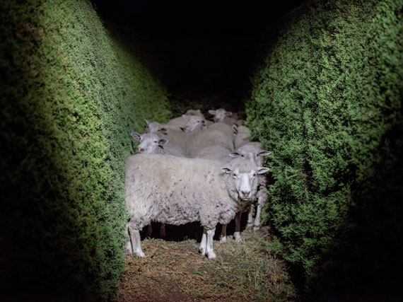 Alejandro Chaskielberg - 'Dreaming' from the series 'Laberinto'