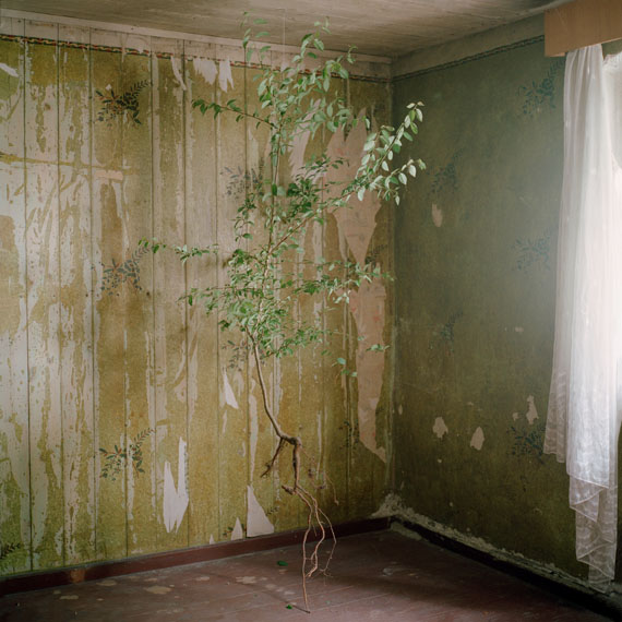 Claire Laude - 'L'arbre', from the series 'When Water Comes Together With Other Water'