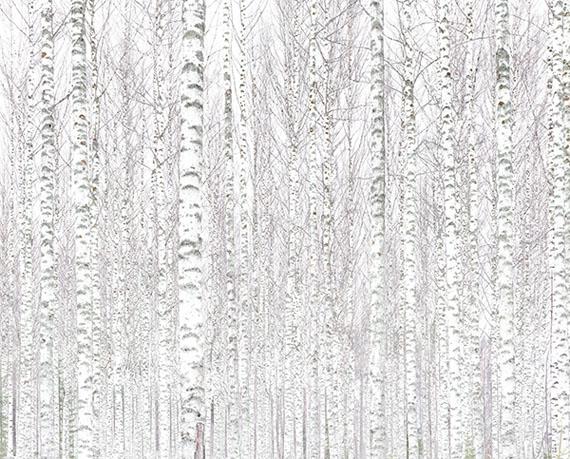 Andreas Gefeller010, 2017Inkjetprint, 140 x 174 cmCourtesy Thomas Rehbein Galerie, VG Bild-Kunst 2018