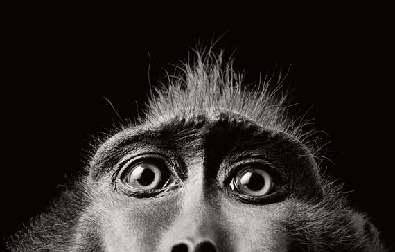 © Tim Flach, Monkey Eyes 2004