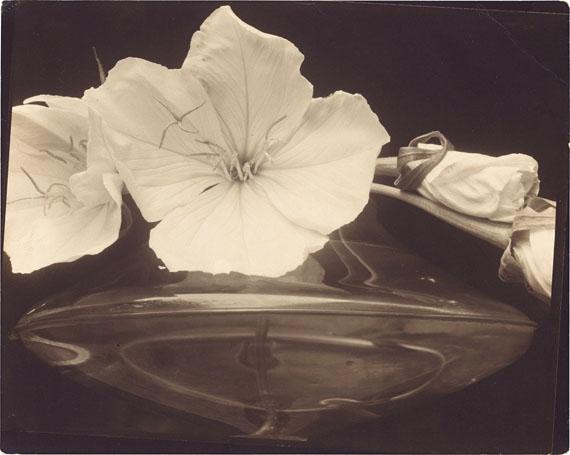 Edward SteichenEvening Primroses. Before 1929. Vintage. Gelatin silver print. 20.3 ×25.3 cmEUR 50,000–70,000