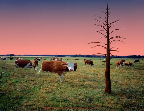 Caroline Dlugos: From foreign gardens (Cows II), 1995, 100 x 129 cm © VG Bild-Kunst, Bonn 2018