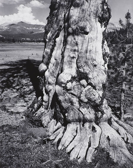 ANSEL ADAMSTuolomne Meadows, 1941Gelatin silver print mounted to board© The Ansel Adams Publishing Rights Trust