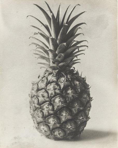Karl Blossfeldt: Pineapple. Fruit spike, n. d.© Courtesy Die Photographische Sammlung/SK Stiftung Kultur, Kölnin Kooperation mit der Sammlung Karl Blossfeldt in der Universität der Künste, BerlinUniversitätsarchiv, 2019