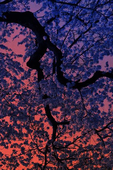 """Albarrán Cabrera, """"The mouth of Krishna #60455"""", 2018Pigmentabzug auf japanischem Gampi-Papier und Blattgold, 48 x 32 cm, Auflage 10© die Künstler, courtesy Persiehl & Heine Galerie für Fotografie"""