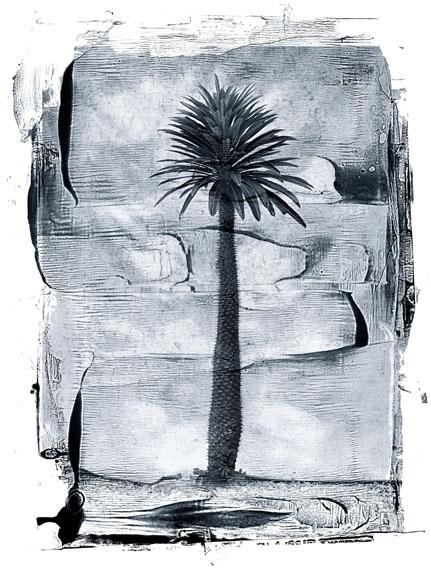 Palm Tree, St, John, Virgin Islands, 1988, INK© Albert Watson