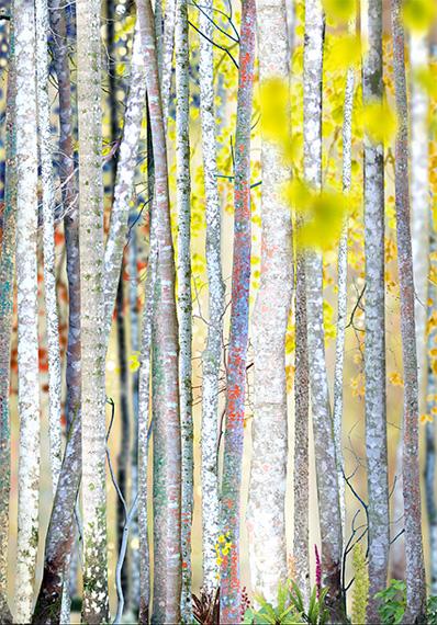 Ruud van Empel, Collage#3 (2017), 150 X 105 CM, Archival pigment print