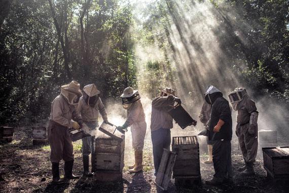 God's Honey, Mexico © Nadia Shira Cohen