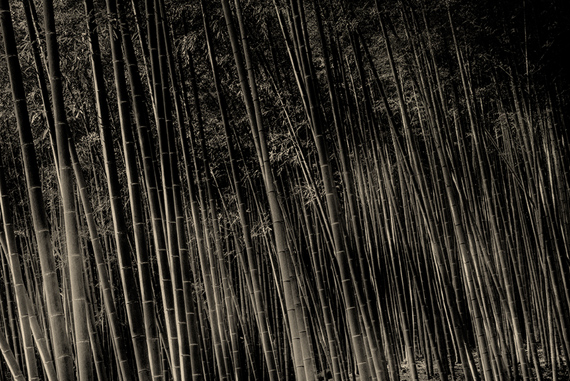 Paul Cupido, Bamboo II, Tanabata, 2018, Handcrafted print on Japanese and cotton paper (Chine-collé print on Washi and Toyobo paper) 50.5 x 65.6 cm, Edition 3 & 2 AP